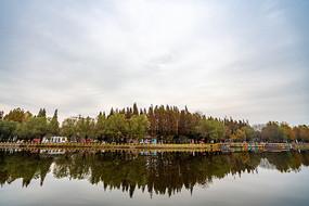 树林与湖中倒影
