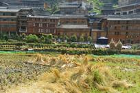 千户苗寨收割后的稻田草垛