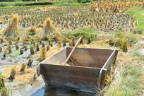 收割后的稻田及打谷桶