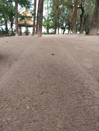 沙中的车辙痕迹