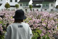 桃花和看花人
