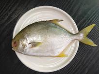 冷冻金鲳鱼