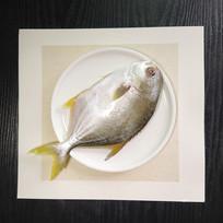 野生金鲳鱼