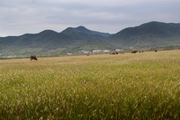 山林草原牧场