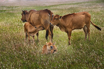 草原欢乐图