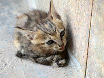 墙角下的小花猫