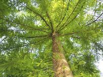 成长小树林