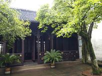 庭院玉兰树