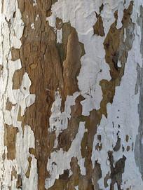 刷白树干纹理