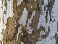 树皮龟裂木纹