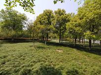 绿油油草坪和森林