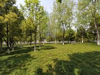 夏日绿色森林