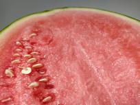 早春白籽西瓜
