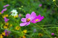 秋英和蜜蜂