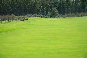高尔夫草坪