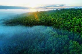大興安嶺茂密林海云霧