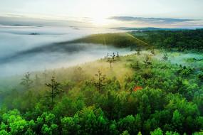 大興安山嶺森林云海