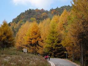 重慶市巫山縣梨子坪森林美景