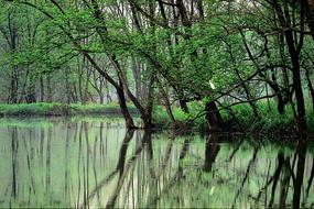 濕地的春天