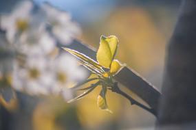 逆光枝葉攝影