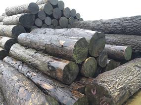 木材堆场拍摄