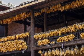 农家屋檐下挂晒的玉米
