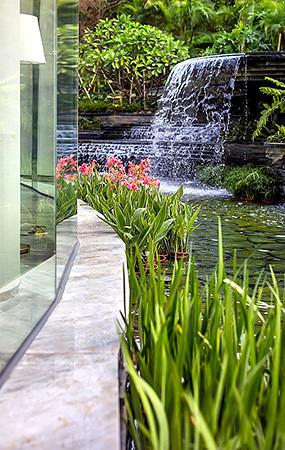 水边植物造景