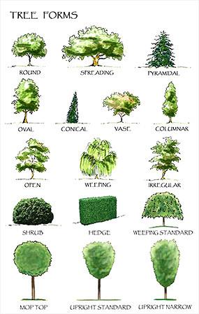 植物立面手绘JPG素材