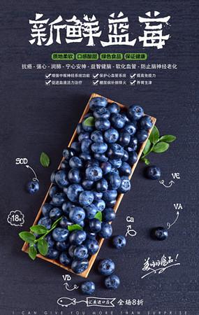蓝莓海报设计