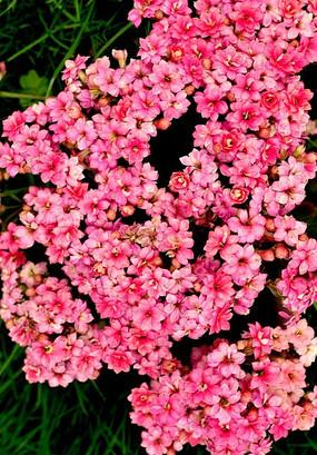 粉色小碎花