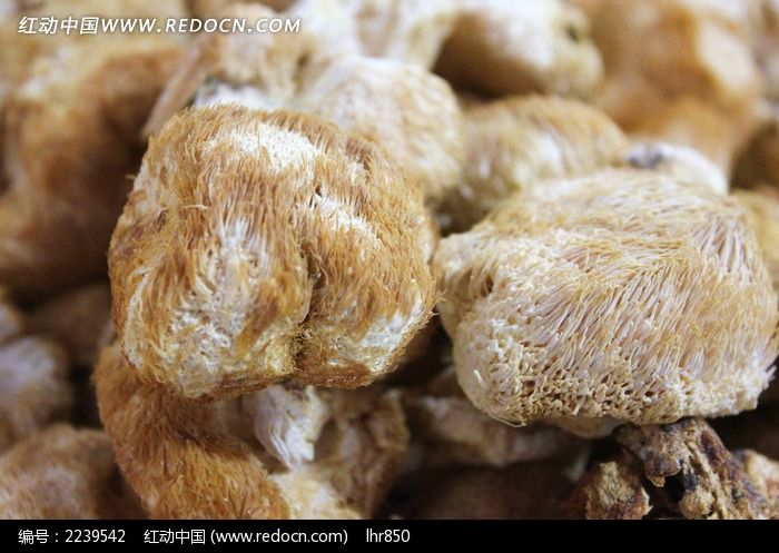 山货猴头菇图片