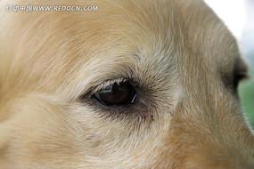 狗狗的眼神