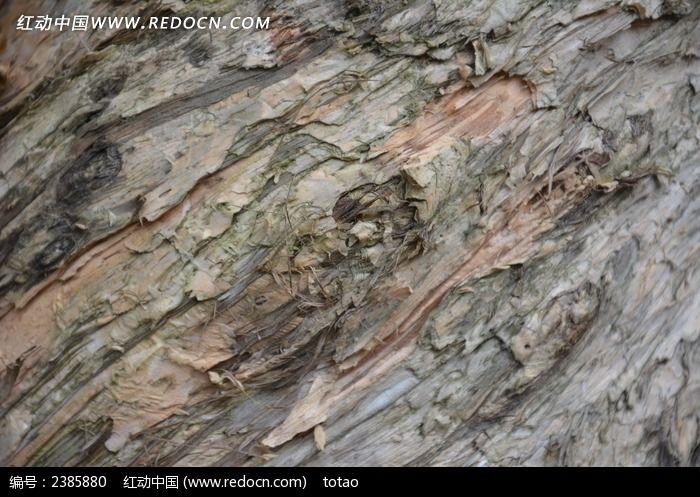 白千层树皮纹理图片