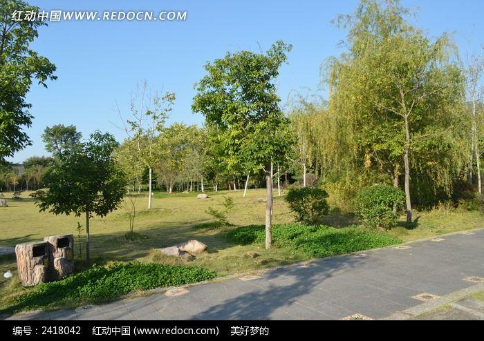 公园里的树林图片