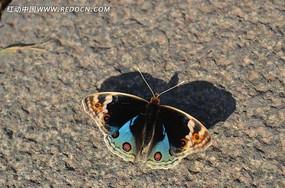 蓝色的蝴蝶