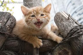 在树上叫的小猫