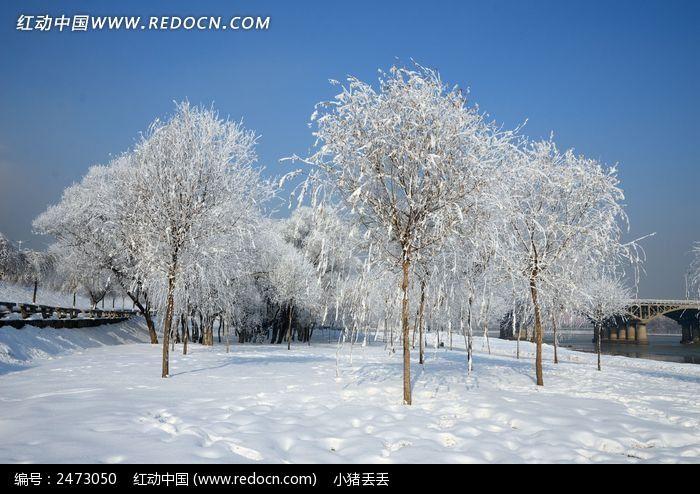 雪地银装素裹的小树图片