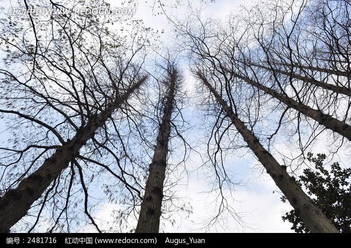 高大挺拔的树木图片