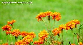 草地上的鲜花
