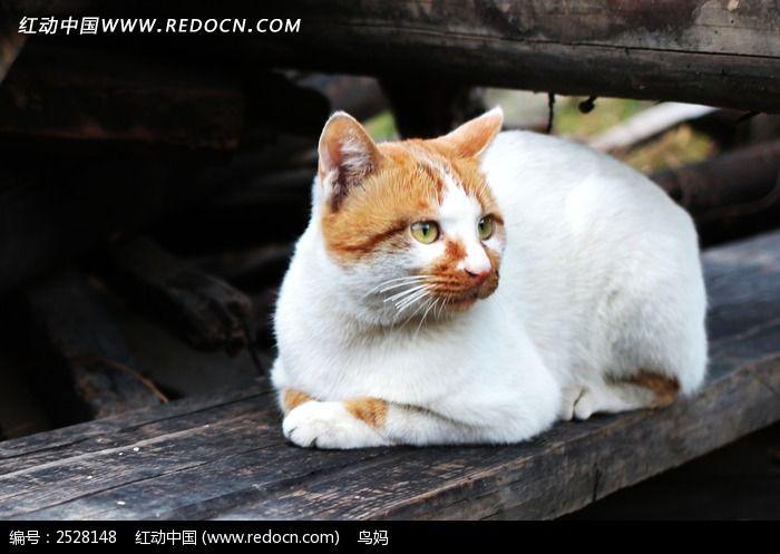 趴着的猫咪图片