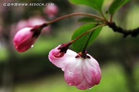 雨后的花朵