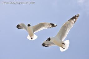 天空飞翔的鸟
