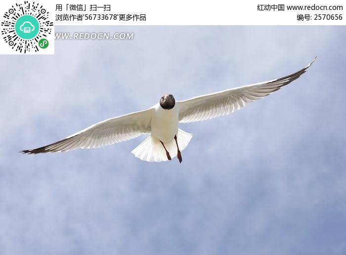 天空展翅飞翔的鸟图片