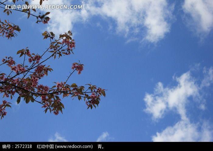 蓝天下的树枝图片
