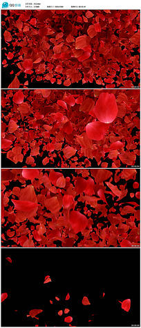动态玫瑰花瓣片落视频素材