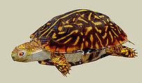 海龟景观SU模型