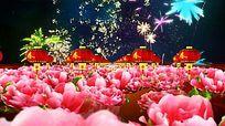 春灯笼牡丹花开视频背景