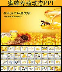 蜂蜜蜜蜂养殖PPT模板