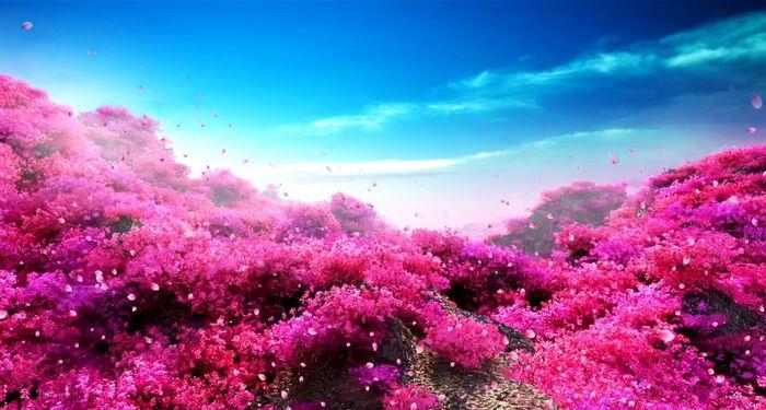 红色满山鲜花背景视频