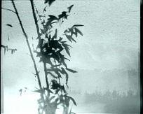 中国风水墨竹子鱼视频